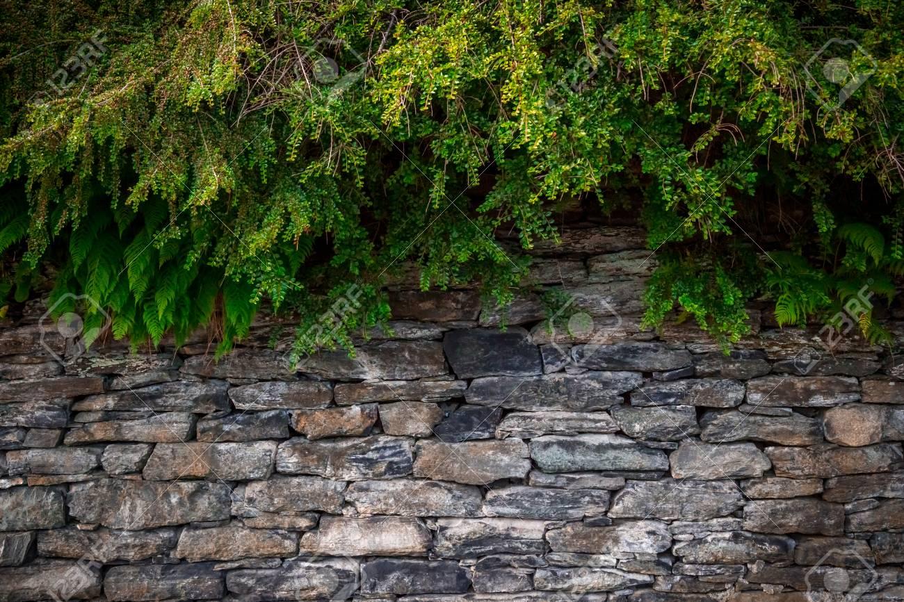 L area è ricoperta di erba e piastrelle di pietra foto royalty