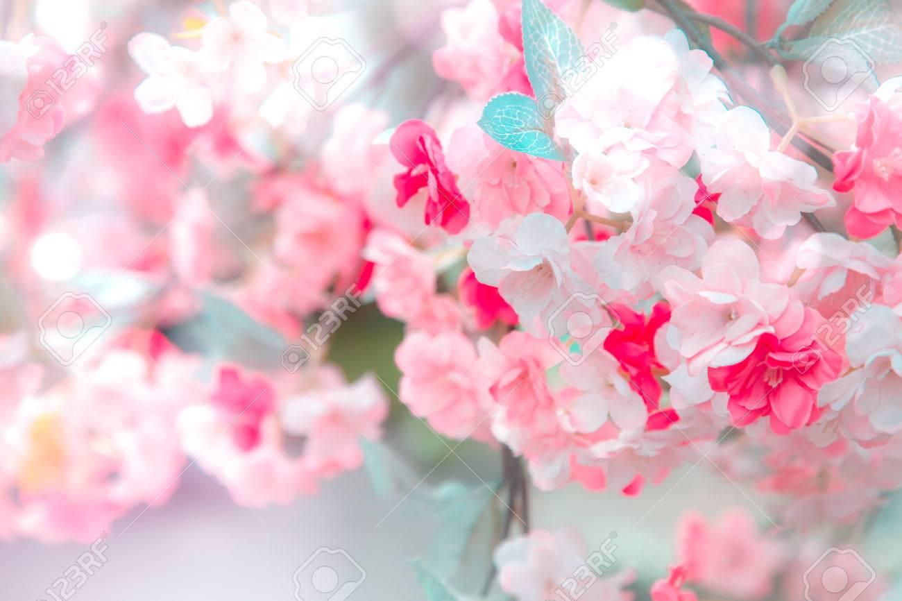Archivio Fotografico , Priorità bassa blu e rosa con i fiori di ciliegia  che inquadrano il cielo luminoso e vibrante con il sole. Primavera sfondo  fiore di
