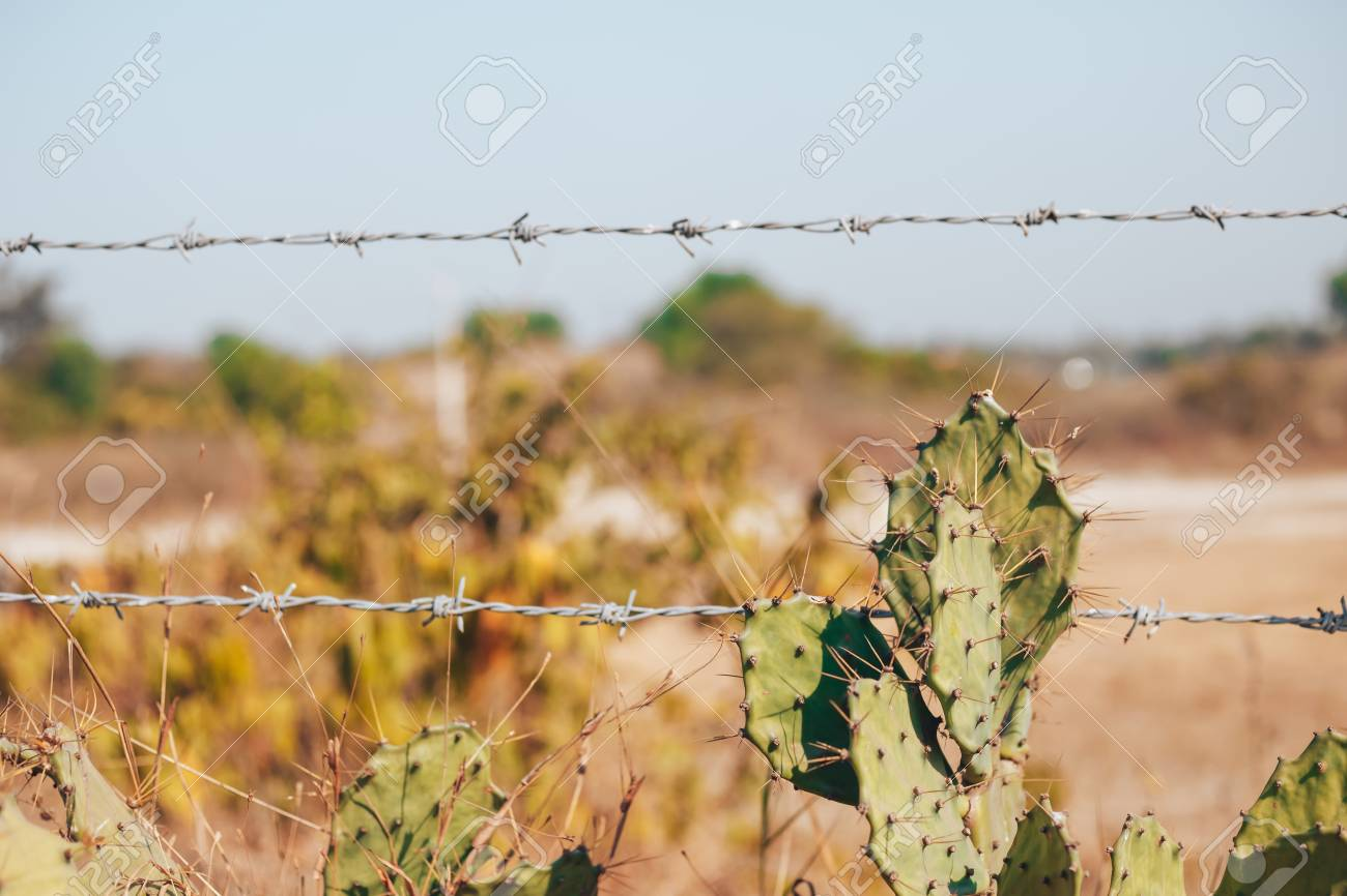 A Old Rustic Barb Wire Fence Next To Desert Cactus This Represents Control