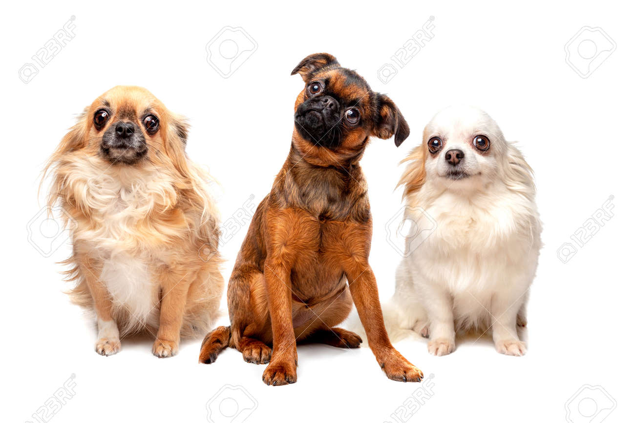 group of different breed dogs sitting in a row - 159332320