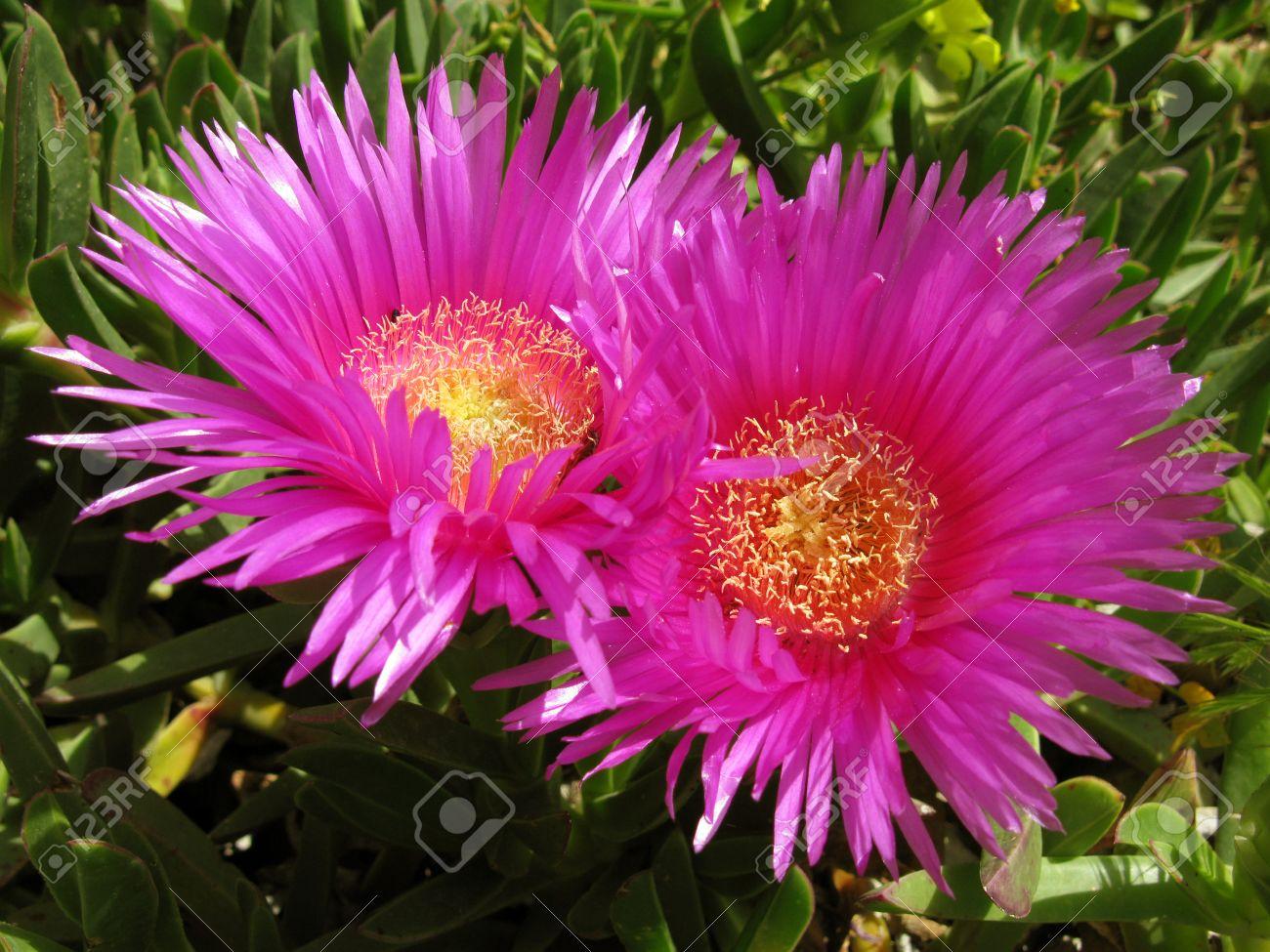 Fleur Magnifique D Une Plante Succulente Qui Pousse Pres De La