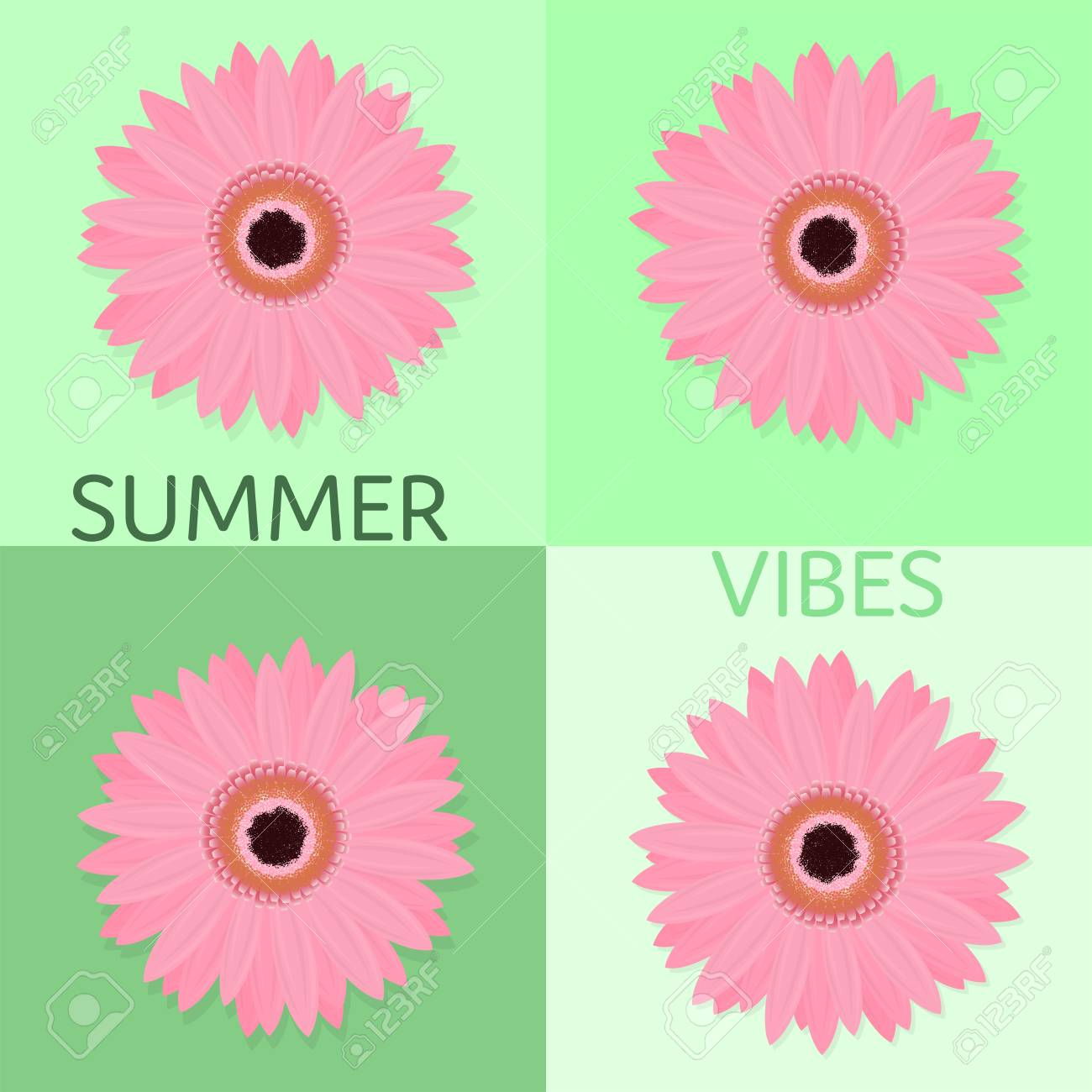 Summertime Pink Marigold Flower With Green Background In Different