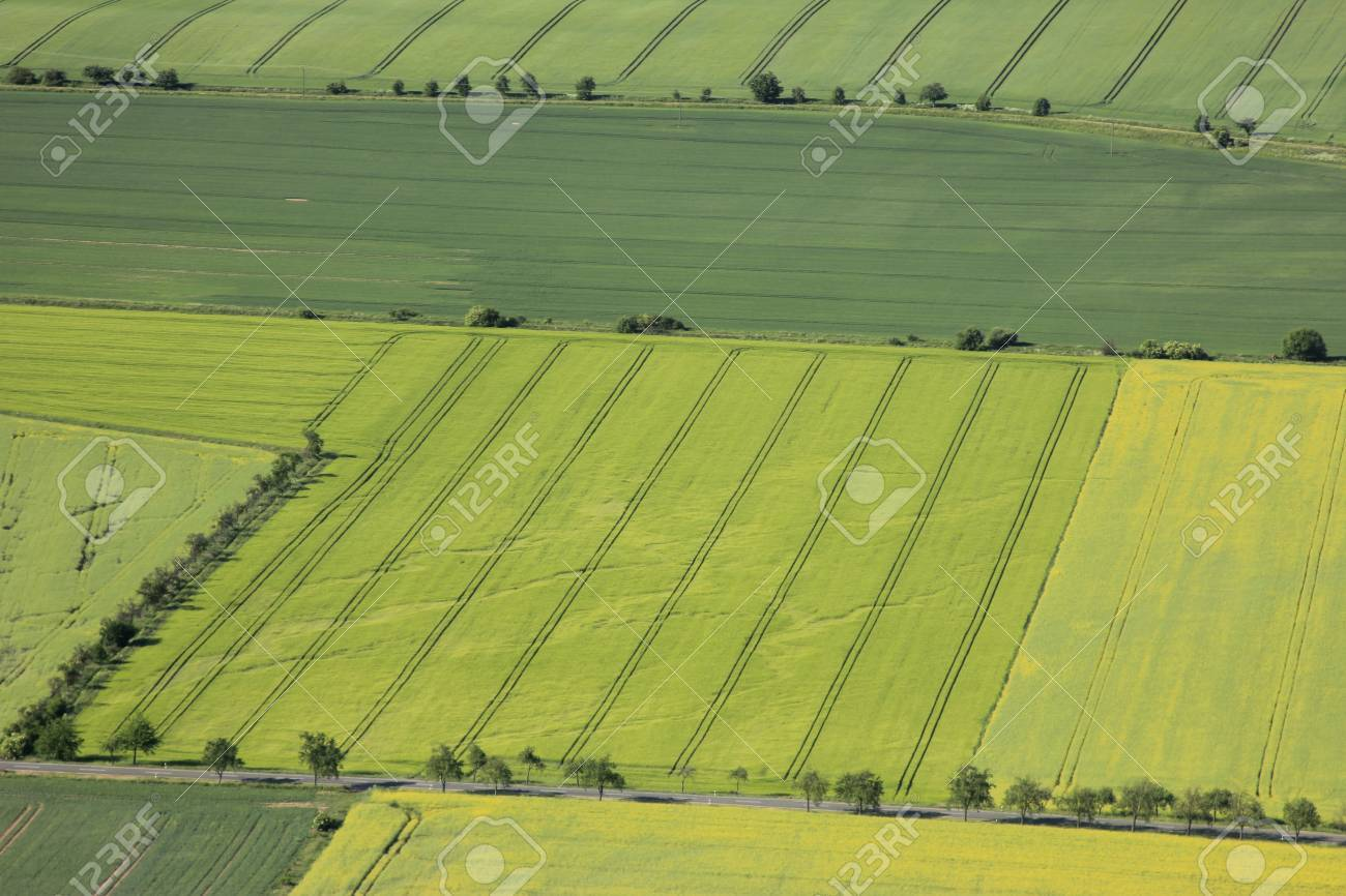 Aerial view of flowering arable land and rapeseed fields Stock Photo - 13331708
