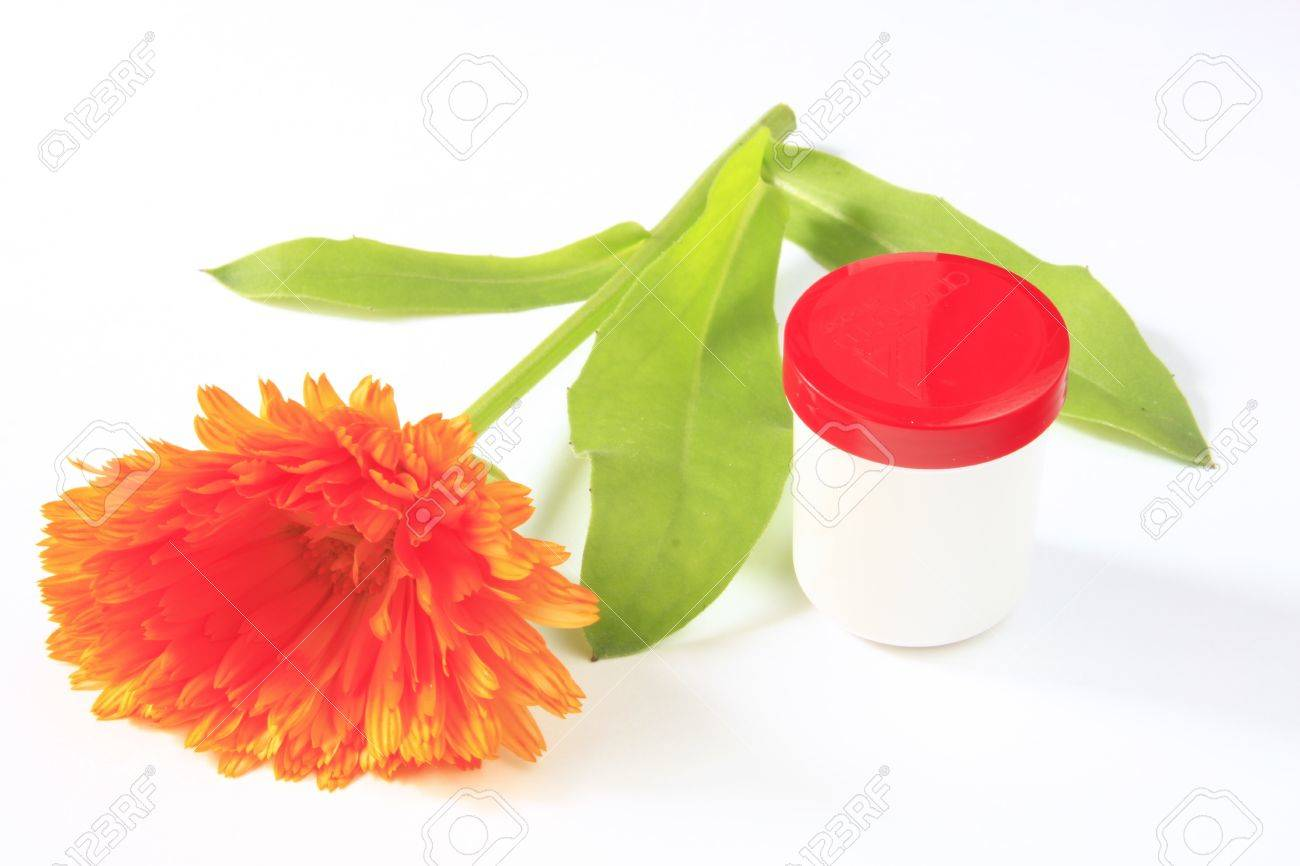 Marigold flower on a white background with a ointment pot stock marigold flower on a white background with a ointment pot stock photo 14163346 mightylinksfo