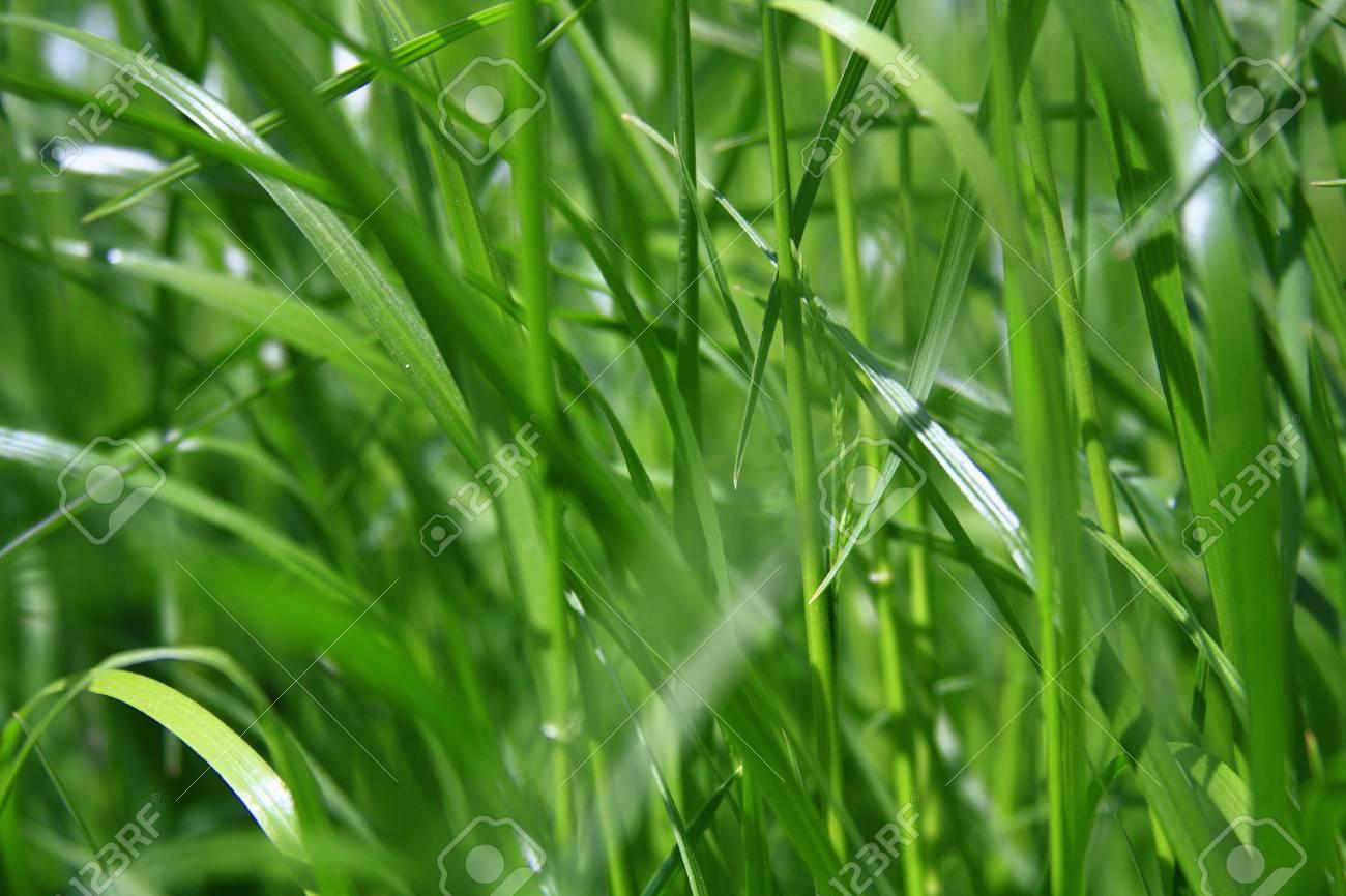 Fresh green grass Stock Photo - 16427910