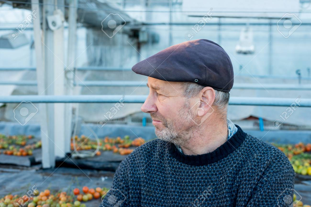 Bearded old man in flat cap and sweater looking away with tomato harvest in  the background 19d7ce0d8c0