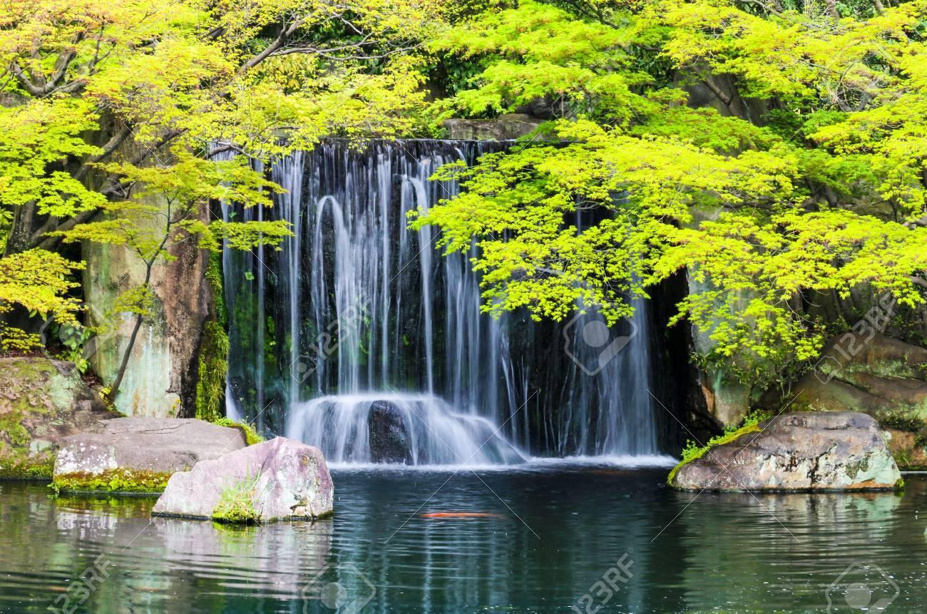 Zen étang de jardin avec cascade et poissons de la carpe au Japon.