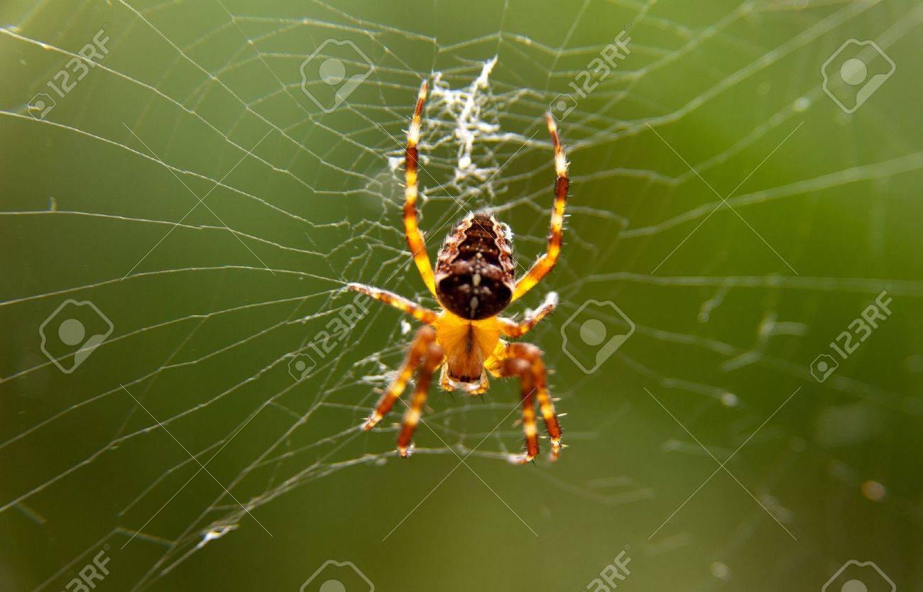 spider Makro Stock Photo - 15048013