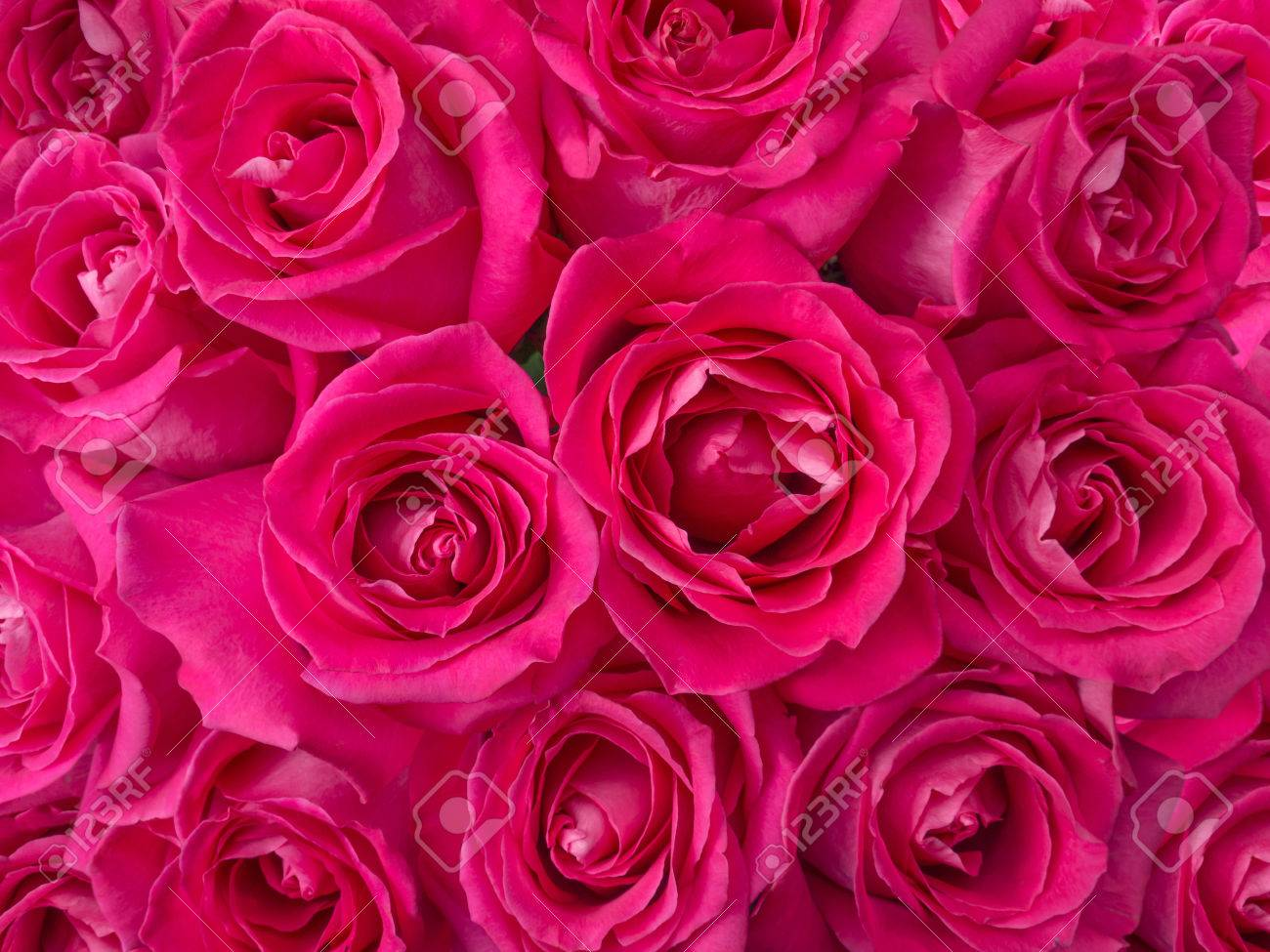 Romantic Deep Pink Roses Bouquet Background Stock Photo Picture And Royalty Free Image Image 47876148