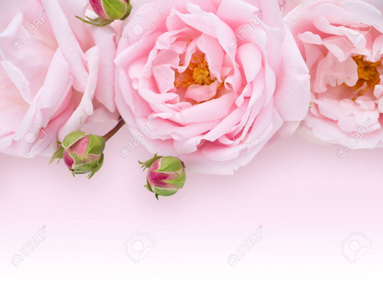 Pale Pink Roses Bouquet On The Light Pink Background Stock Photo Picture And Royalty Free Image Image 47876161