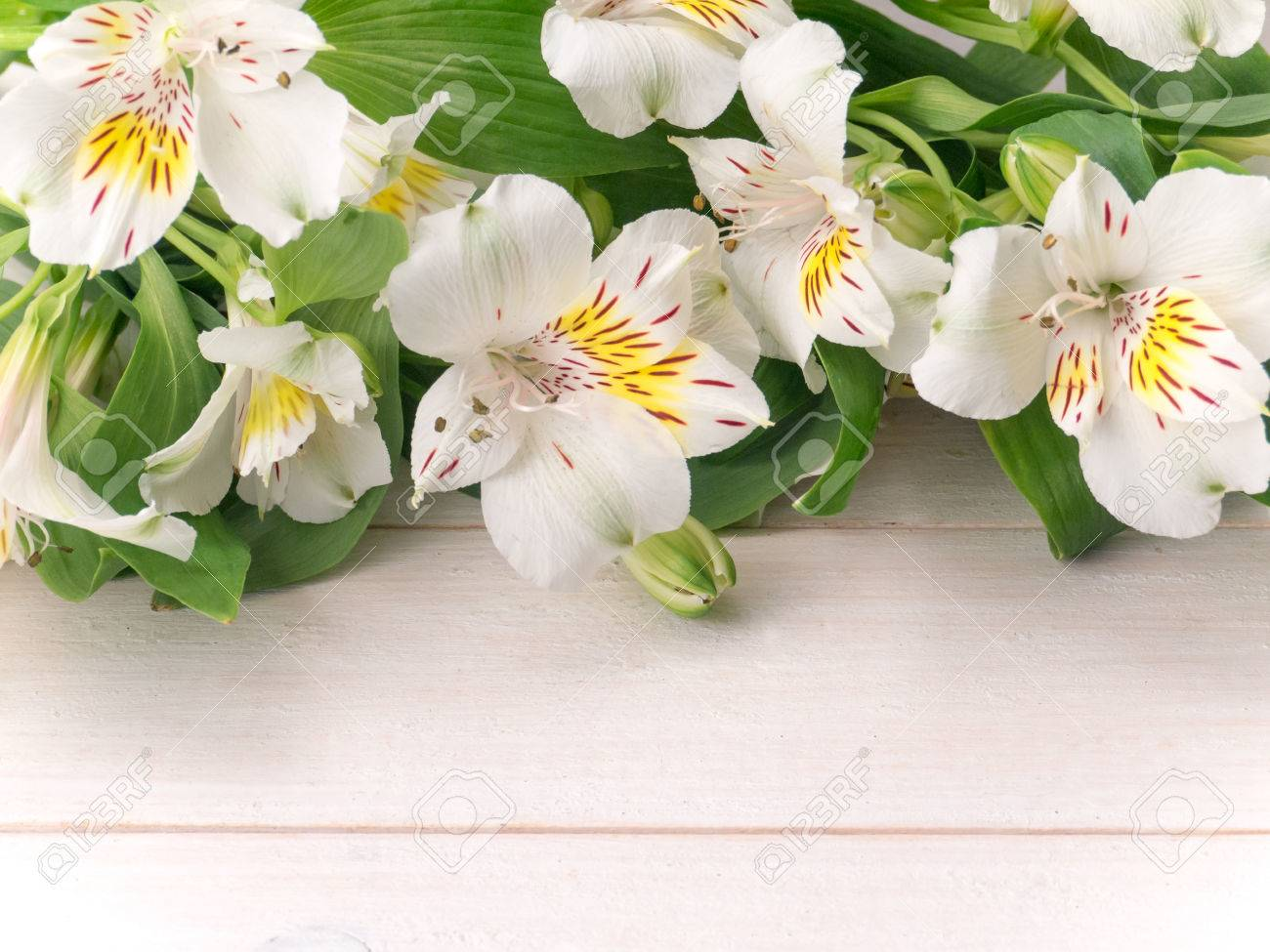 White alstroemeria or peruvian lily flowers on the wooden planks stock photo white alstroemeria or peruvian lily flowers on the wooden planks izmirmasajfo