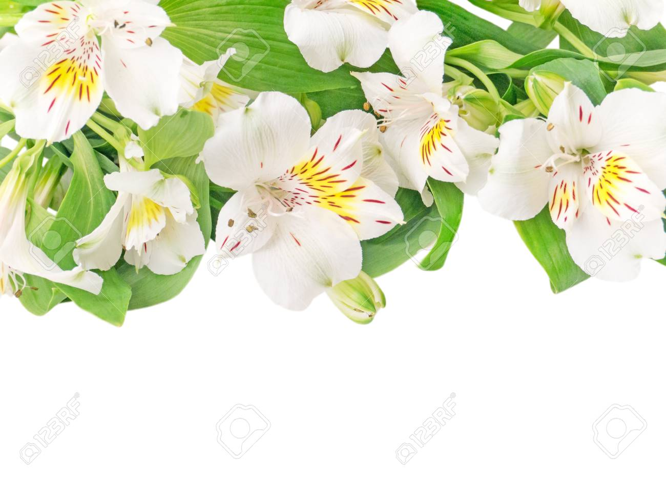 White alstroemeria or peruvian lily flowers isolated on white stock stock photo white alstroemeria or peruvian lily flowers isolated on white mightylinksfo Gallery