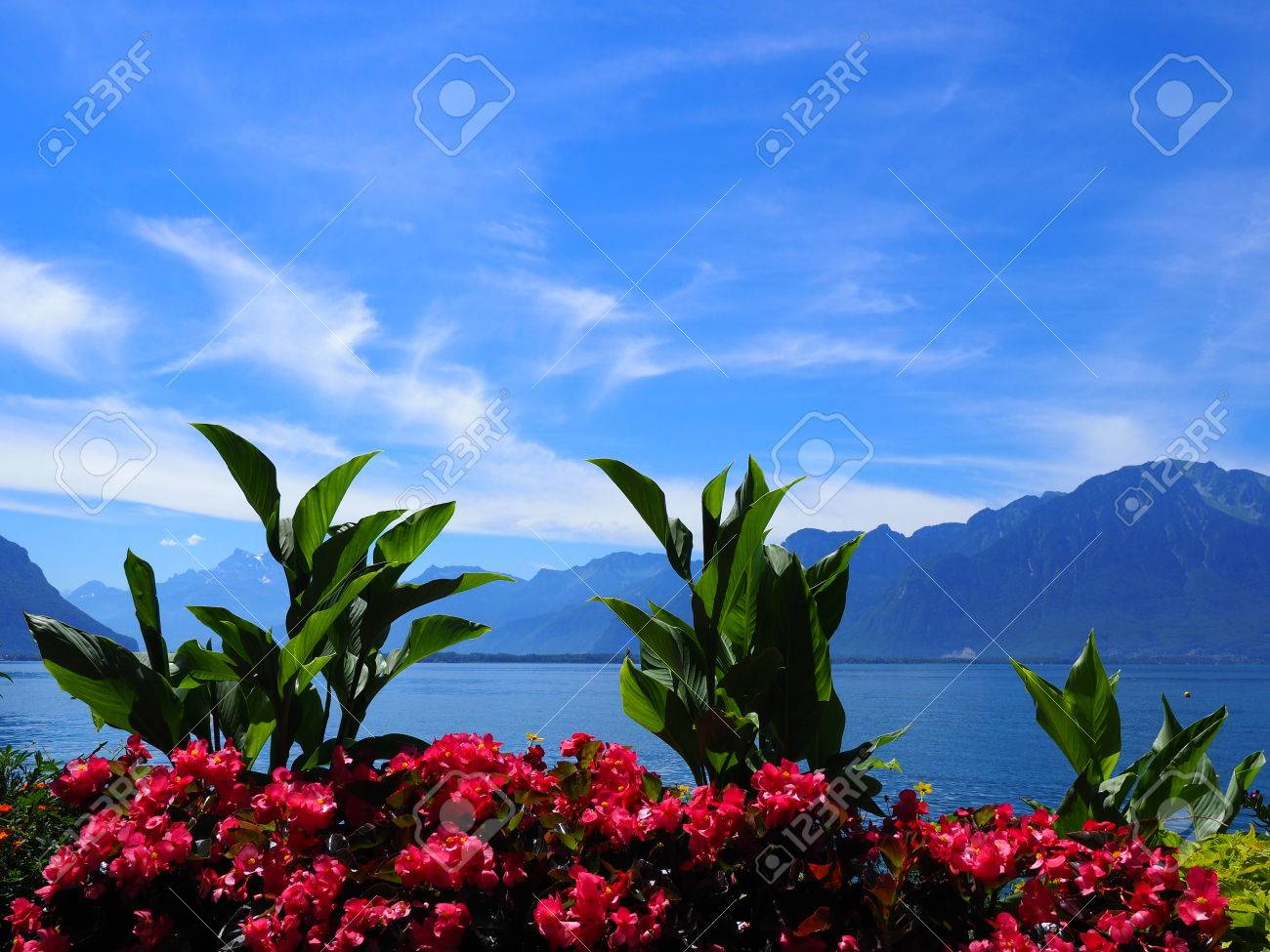 Beauty colorful flowers on promenade in montreux city at lake beauty colorful flowers on promenade in montreux city at lake geneva in switzerland with panoramic view izmirmasajfo Choice Image