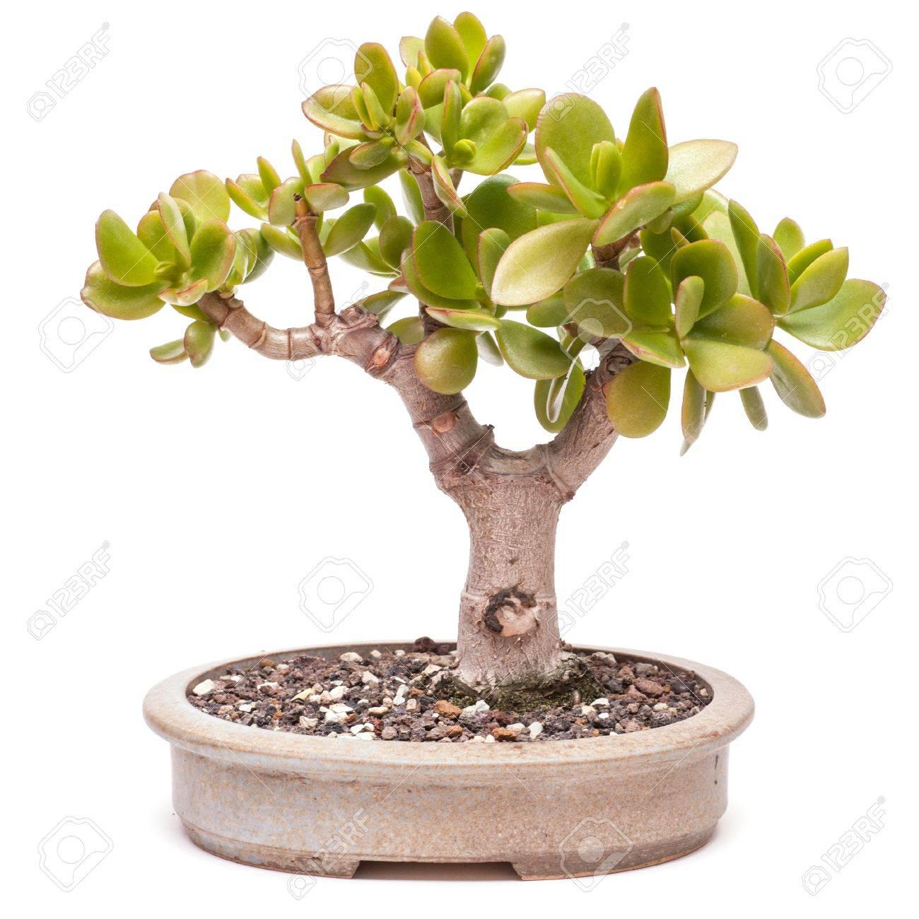 Как сформировать денежное дерево 58