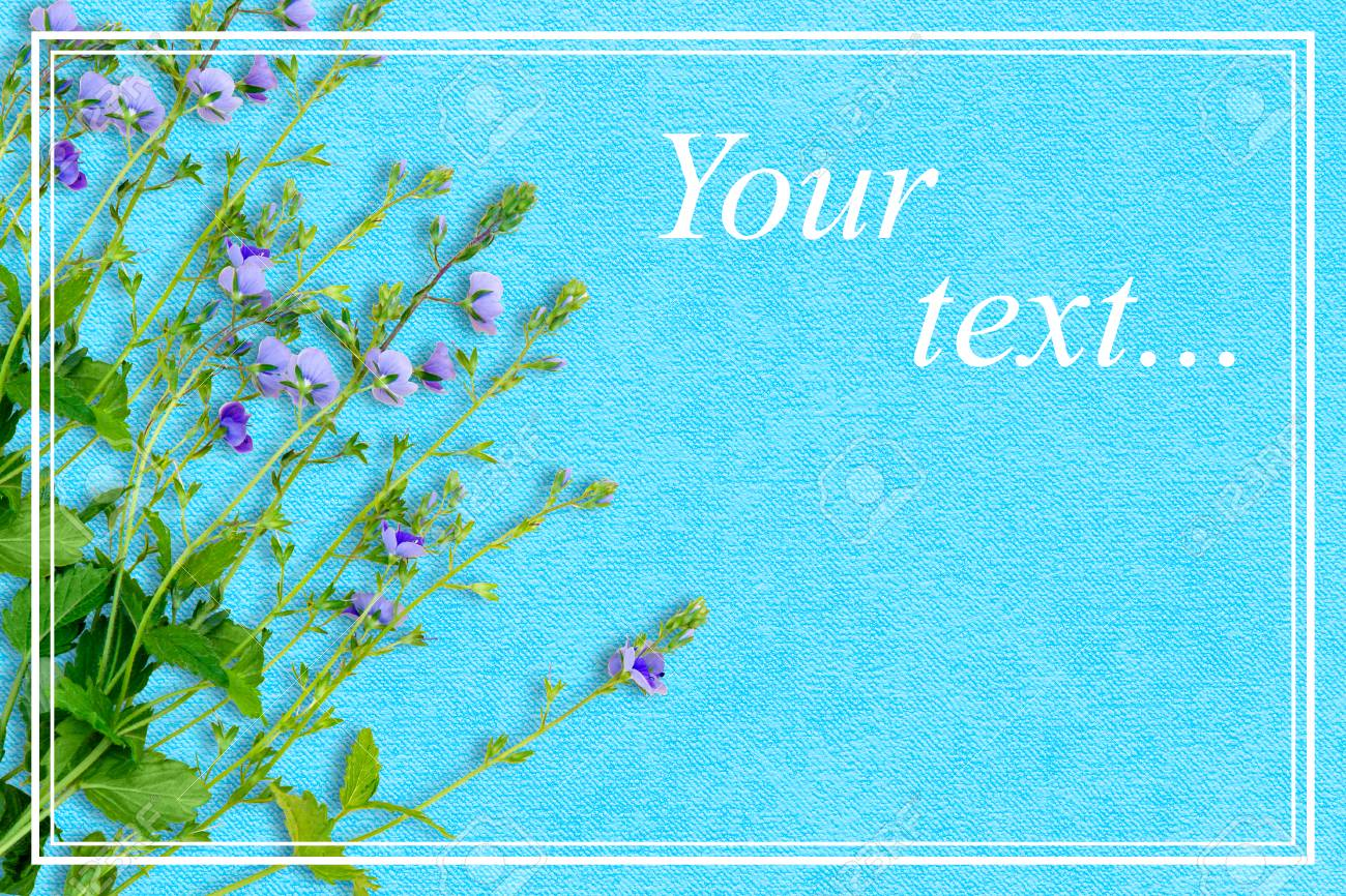 Spring Background With Small Purple Flowers The Name Of The Stock