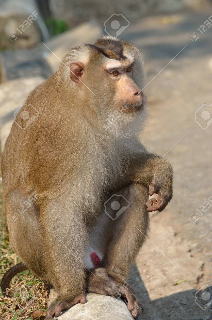 Monkey in khao yai national park. Stock Photo - 12649200