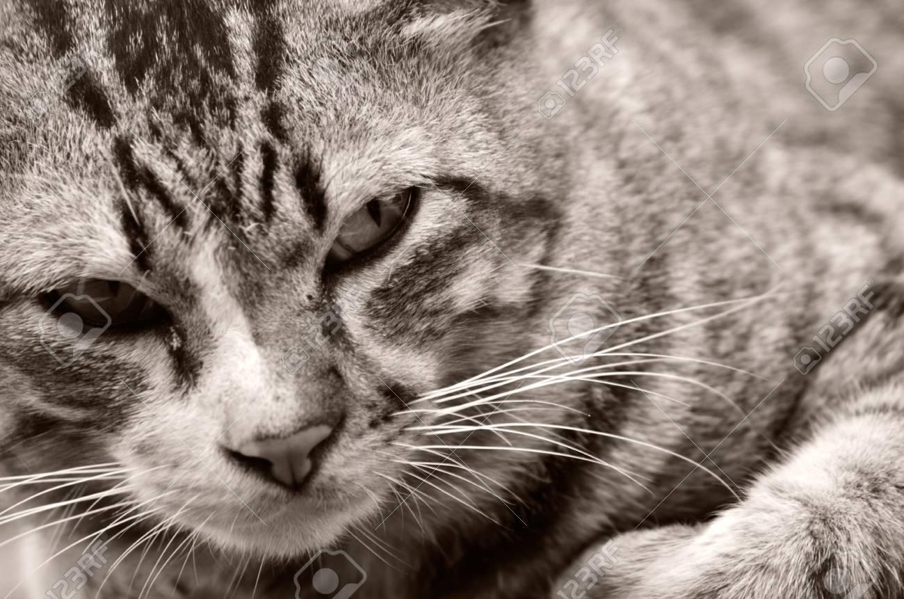 Cat Stock Photo - 17184547