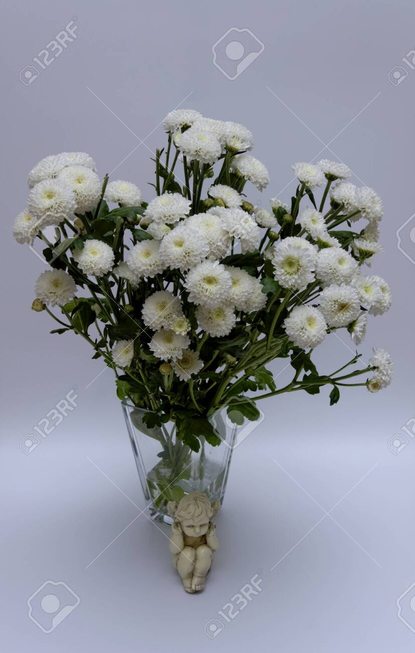 A bouquet of white flowers of Margaret's yawn proper in a nice frame - 148350593
