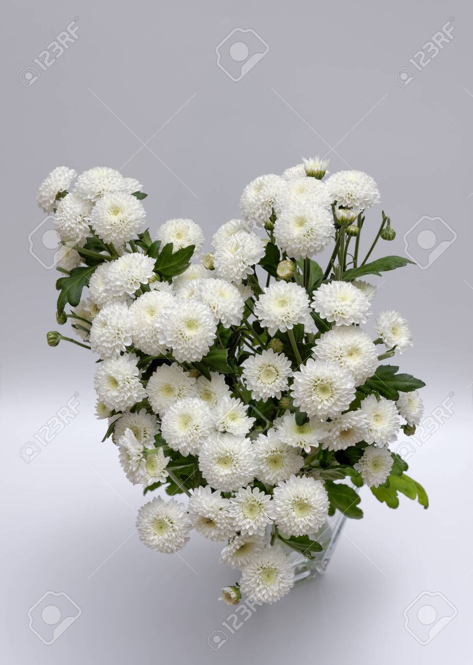 A bouquet of white flowers of Margaret's yawn proper in a nice frame - 148350595