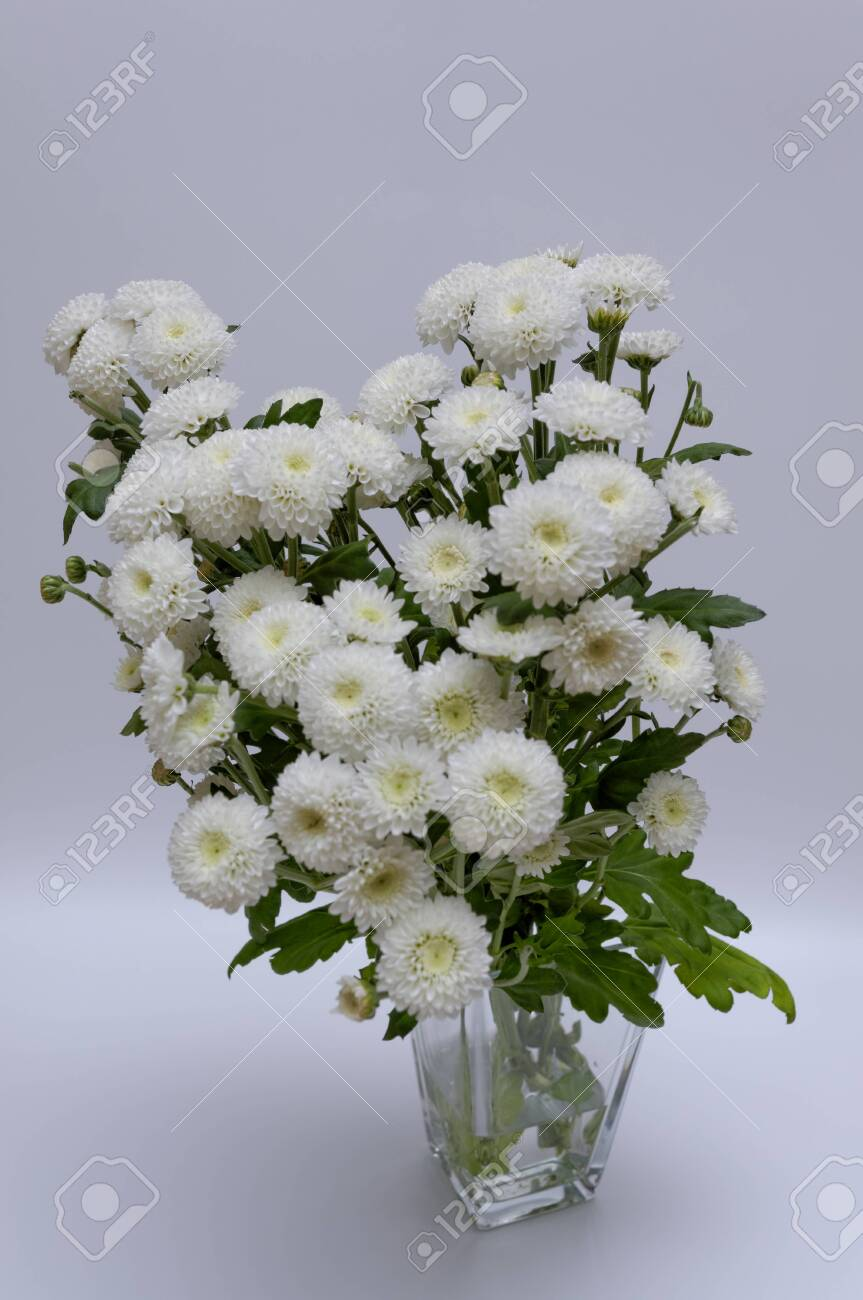 A bouquet of white flowers of Margaret's yawn proper in a nice frame - 148350597