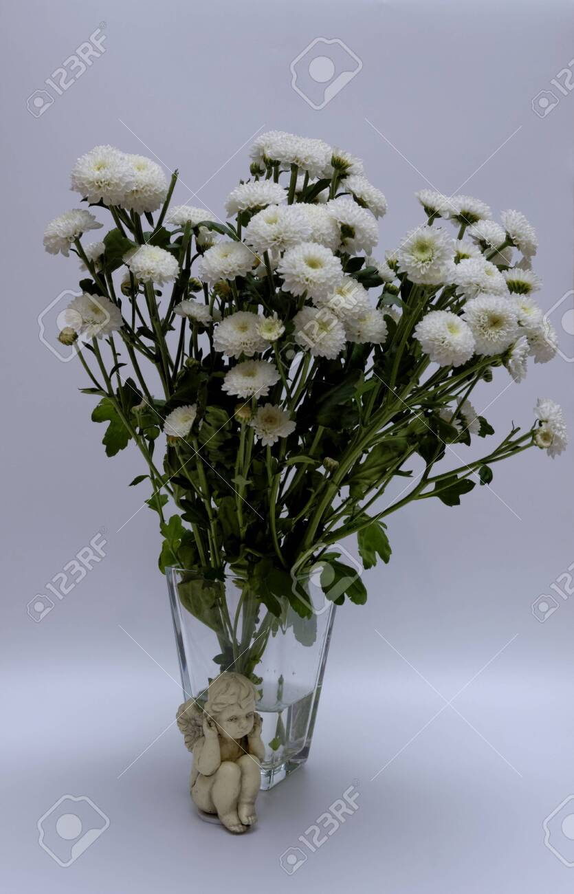A bouquet of white flowers of Margaret's yawn proper in a nice frame - 148350618