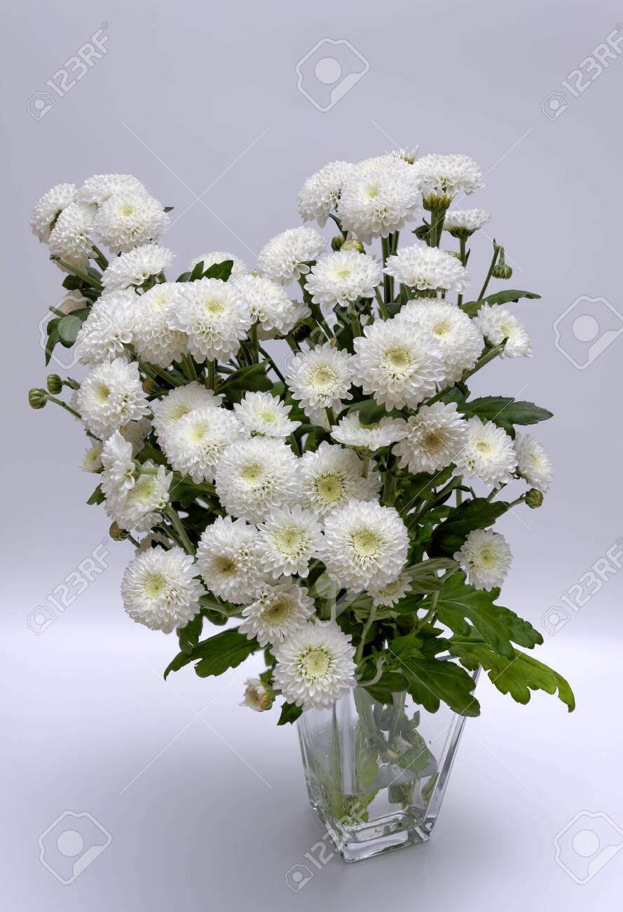 A bouquet of white flowers of Margaret's yawn proper in a nice frame - 148350619
