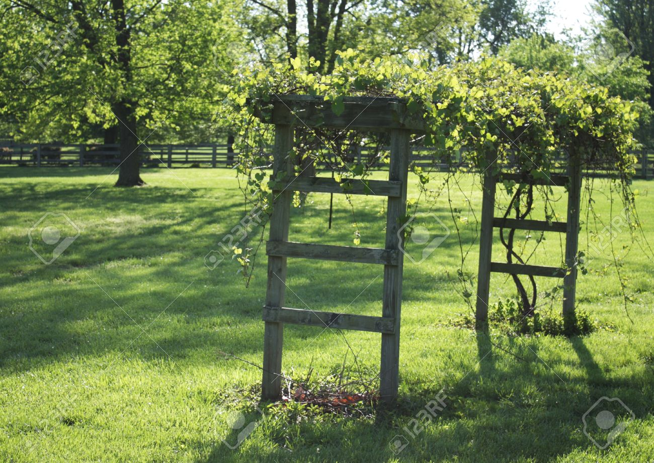 grape arbor in the backyard in kentucky in springtime stock photo
