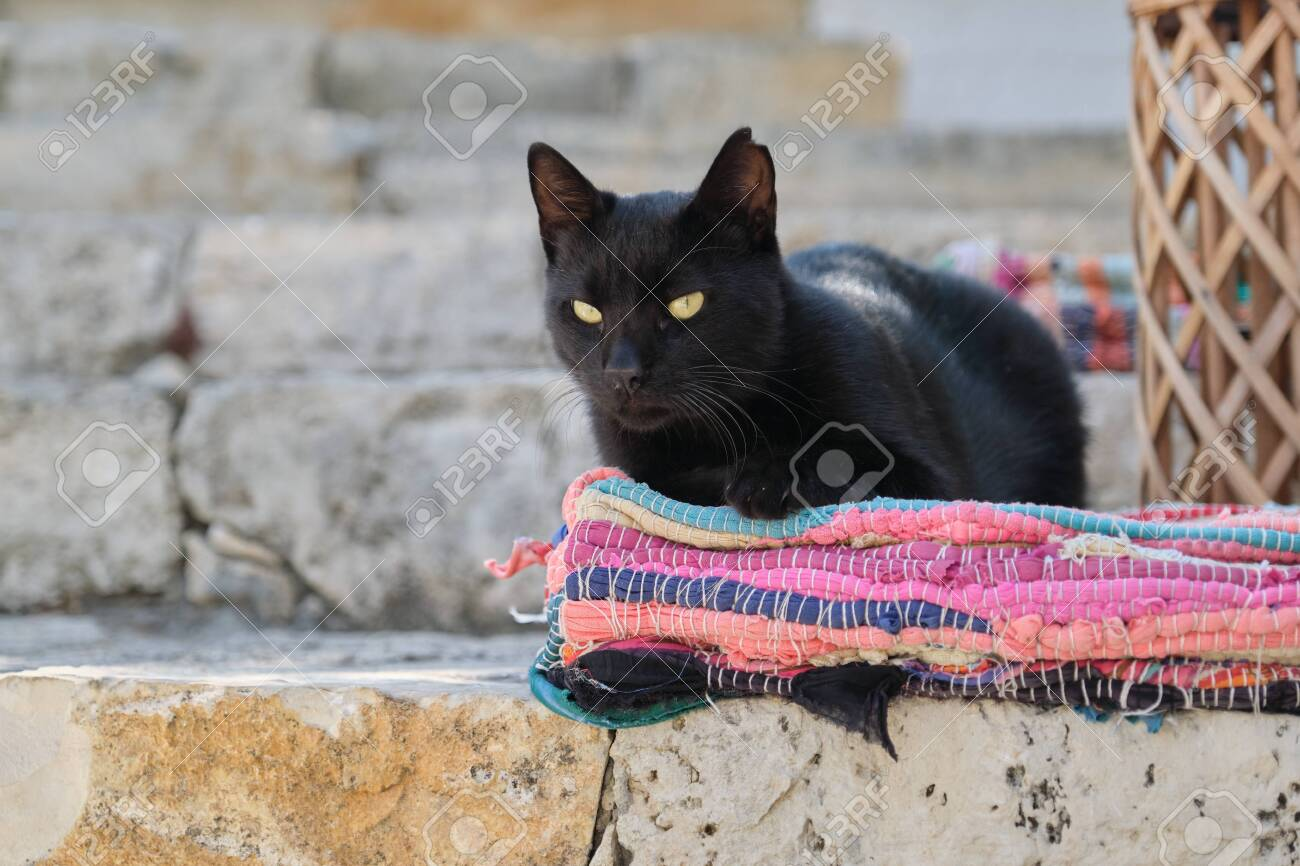 Beautiful adult black male cat lying on a colored rug, outdoor - 145294519
