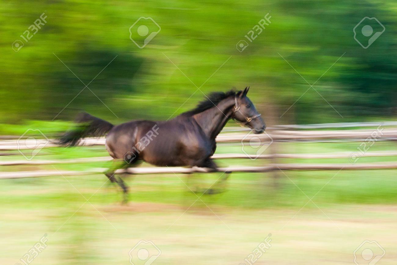 A stallion galloping on paddock Stock Photo - 12421464