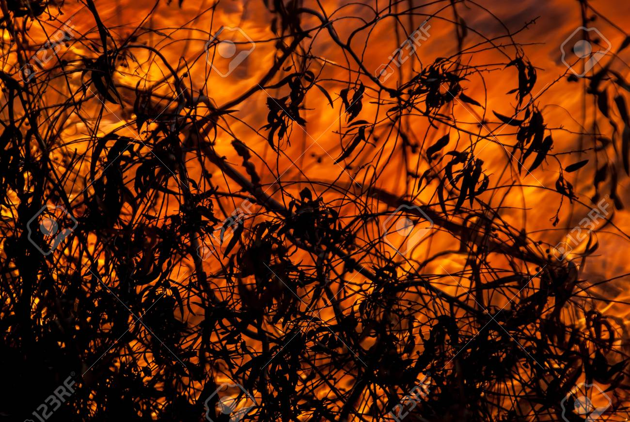 Wild, bush and grass fires Stock Photo - 41611682