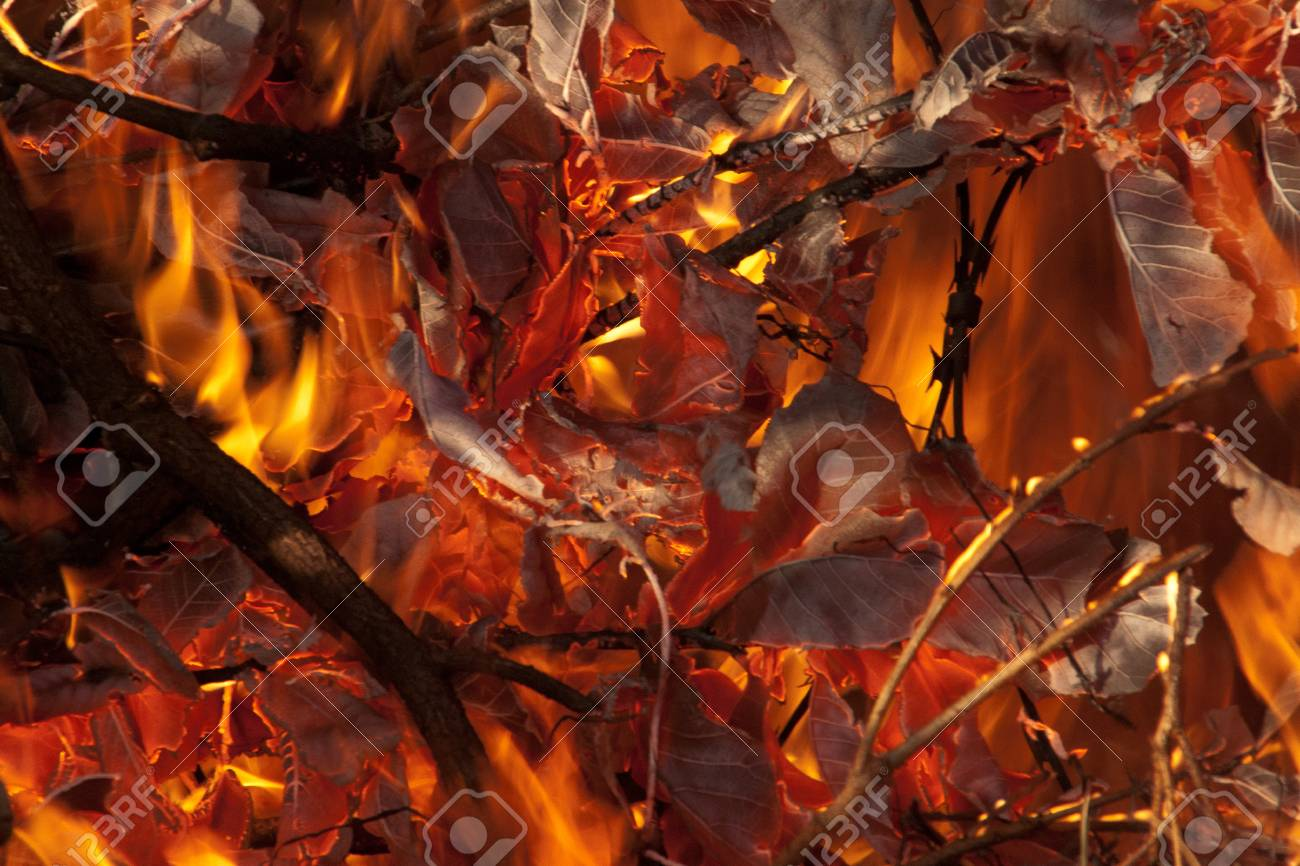Wild fire burning leaves Stock Photo - 44672054