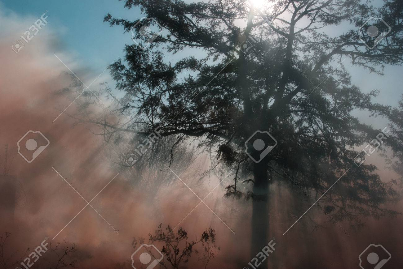 Wild fire under tree with smoke rising and sun arrays shining thorugh Stock Photo - 44672055