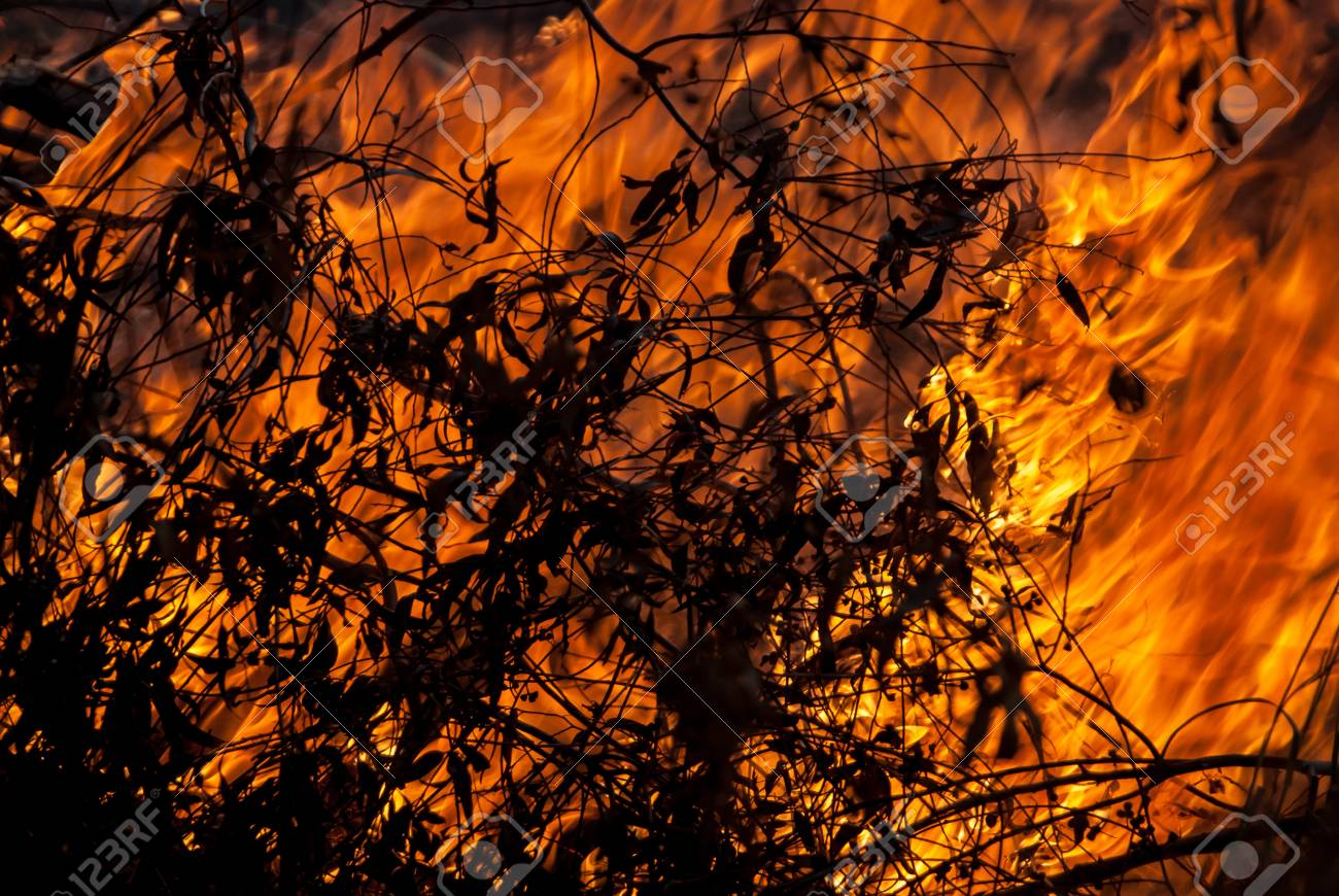 Burning Leaves in a wild fire with branches in the foreground Stock Photo - 46912696