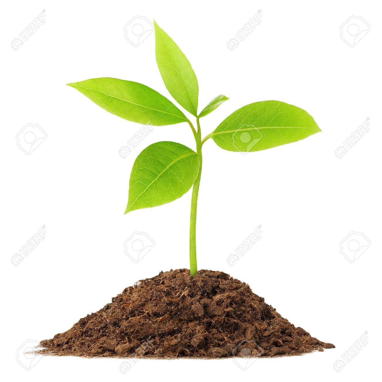 Young green plant growing from soil - 7215563