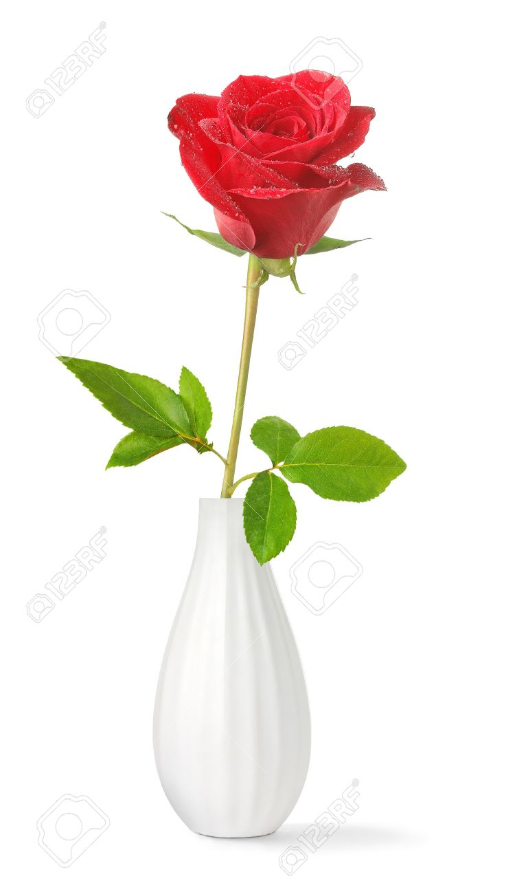 Single red rose in a vase isolated on white stock photo picture single red rose in a vase isolated on white stock photo 7300312 floridaeventfo Choice Image