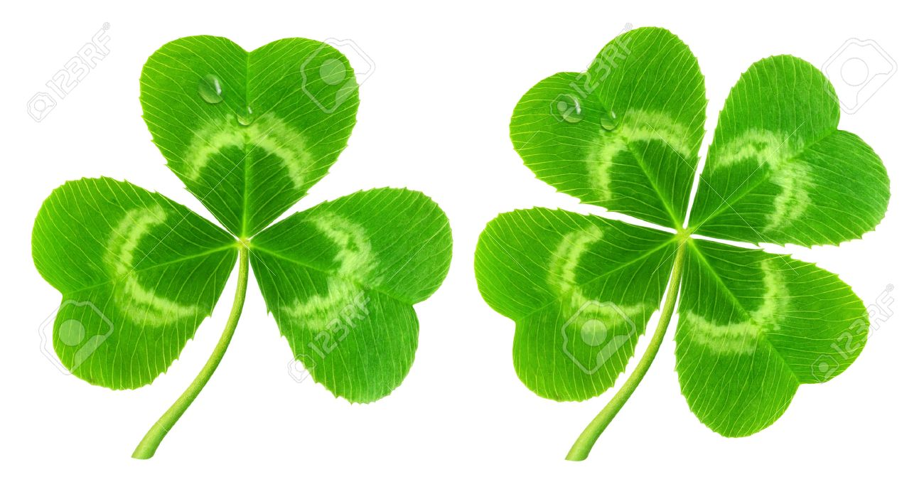 Three Leaf And Four Leaf Clover Isolated On White Symbol Of Stock
