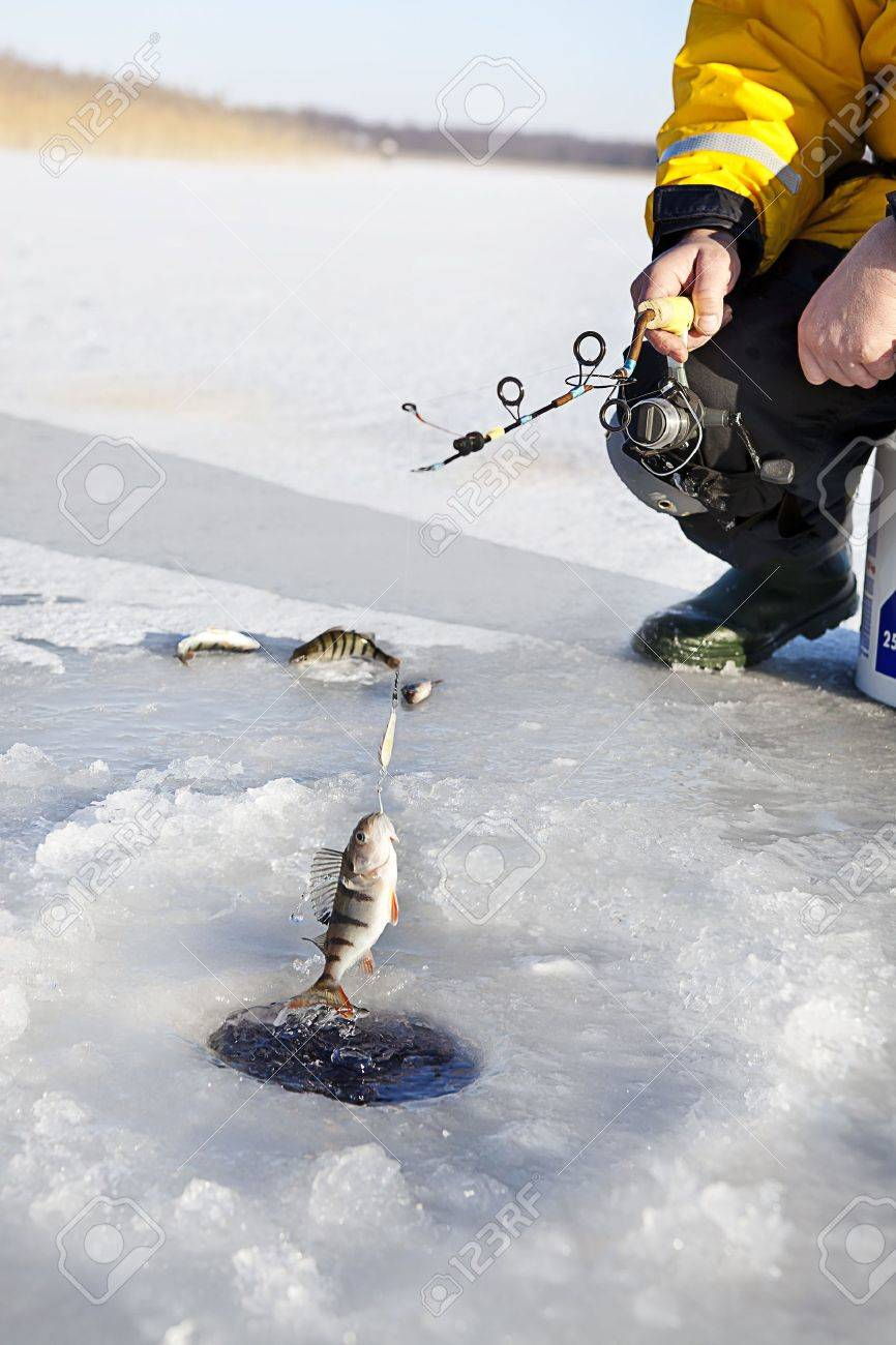 man ice fishing for the perch fish Stock Photo - 15892954