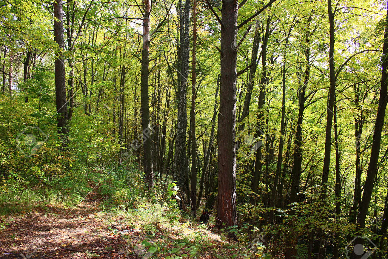 A picturesque slope of a large ravine overgrown with trees in a forest area - 158877280