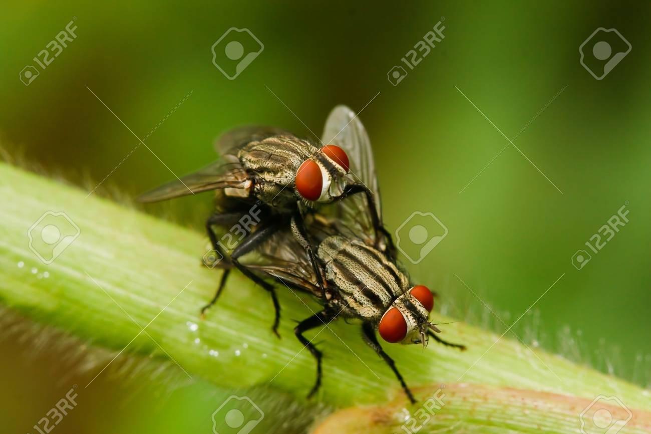 Fly on the grass. Stock Photo - 10256356