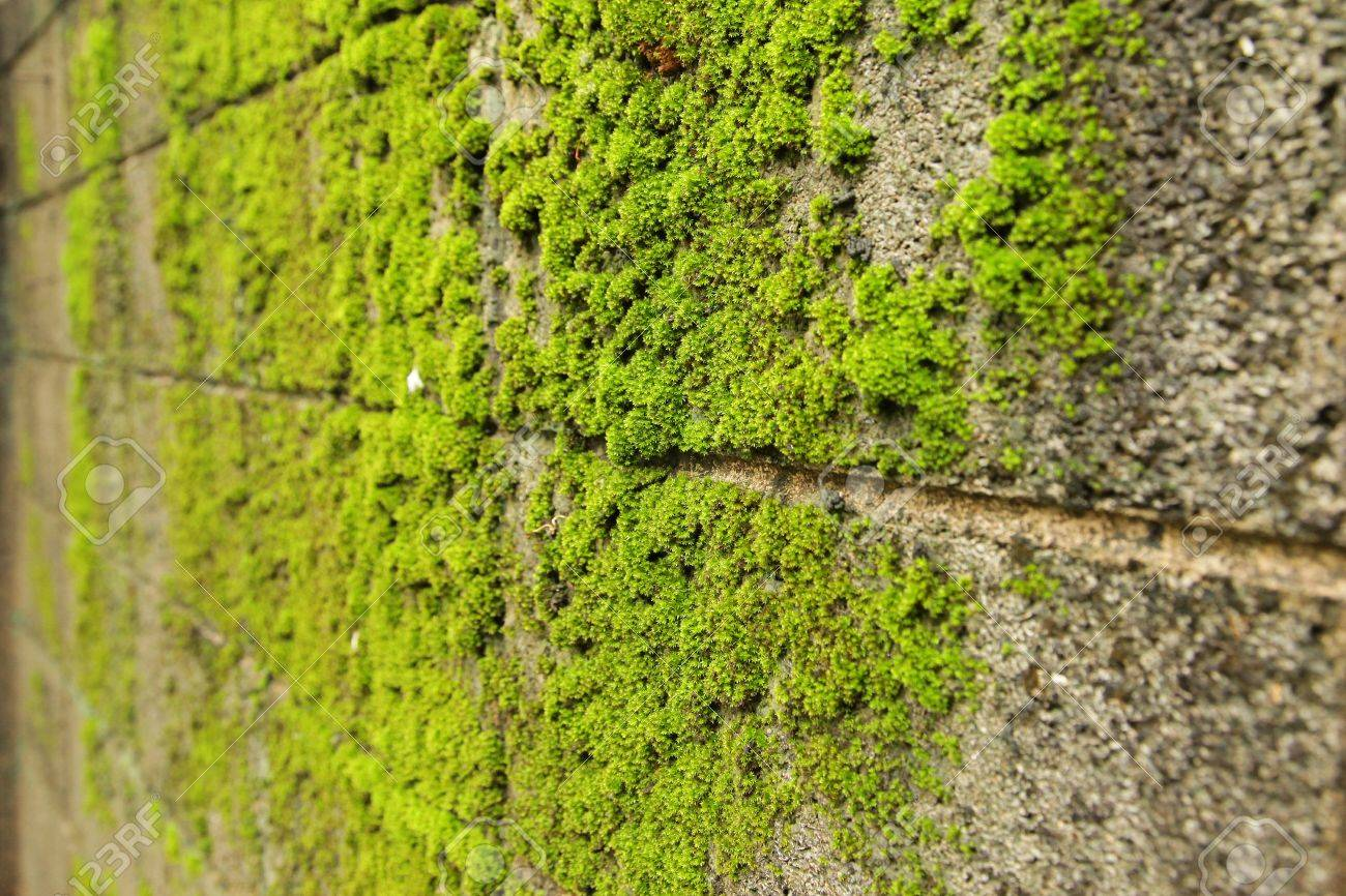 Old concrete Brick Wall with Moss - 14971096