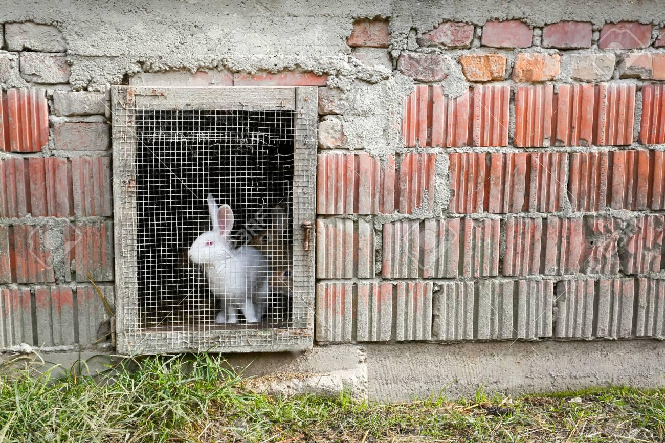Ein Kaninchen In Einem Bauernhof Käfig Auf Dem Lande. Lizenzfreie ...
