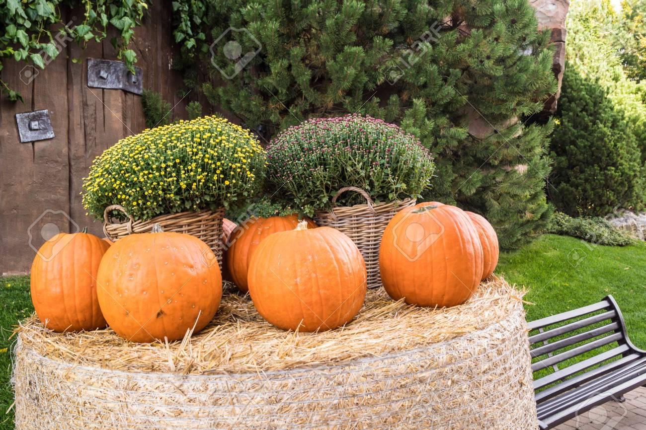 Halloween A Gardaland.Big Pumpkins For Halloween In Gardaland Park Verona Italy