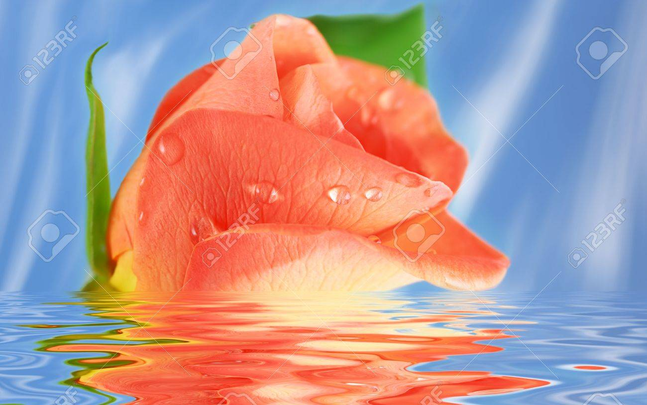 Pink Rose in water against blue background Stock Photo - 5139097