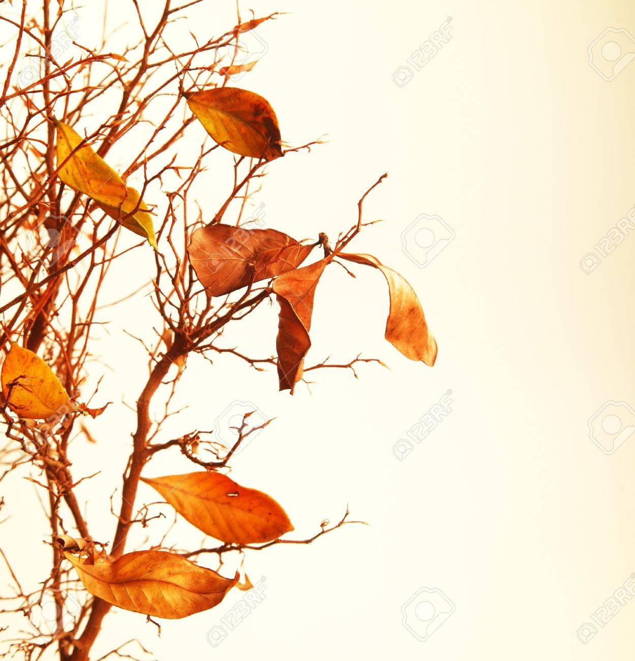 Autumnal tree branch with dry leaves Stock Photo - 7753269