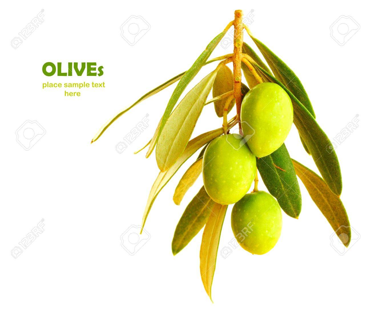 Fresh green olive branch isolated on white background Stock Photo - 7753268
