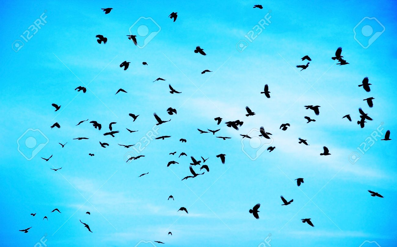 Flock of crows high up in blue sky - 7753455