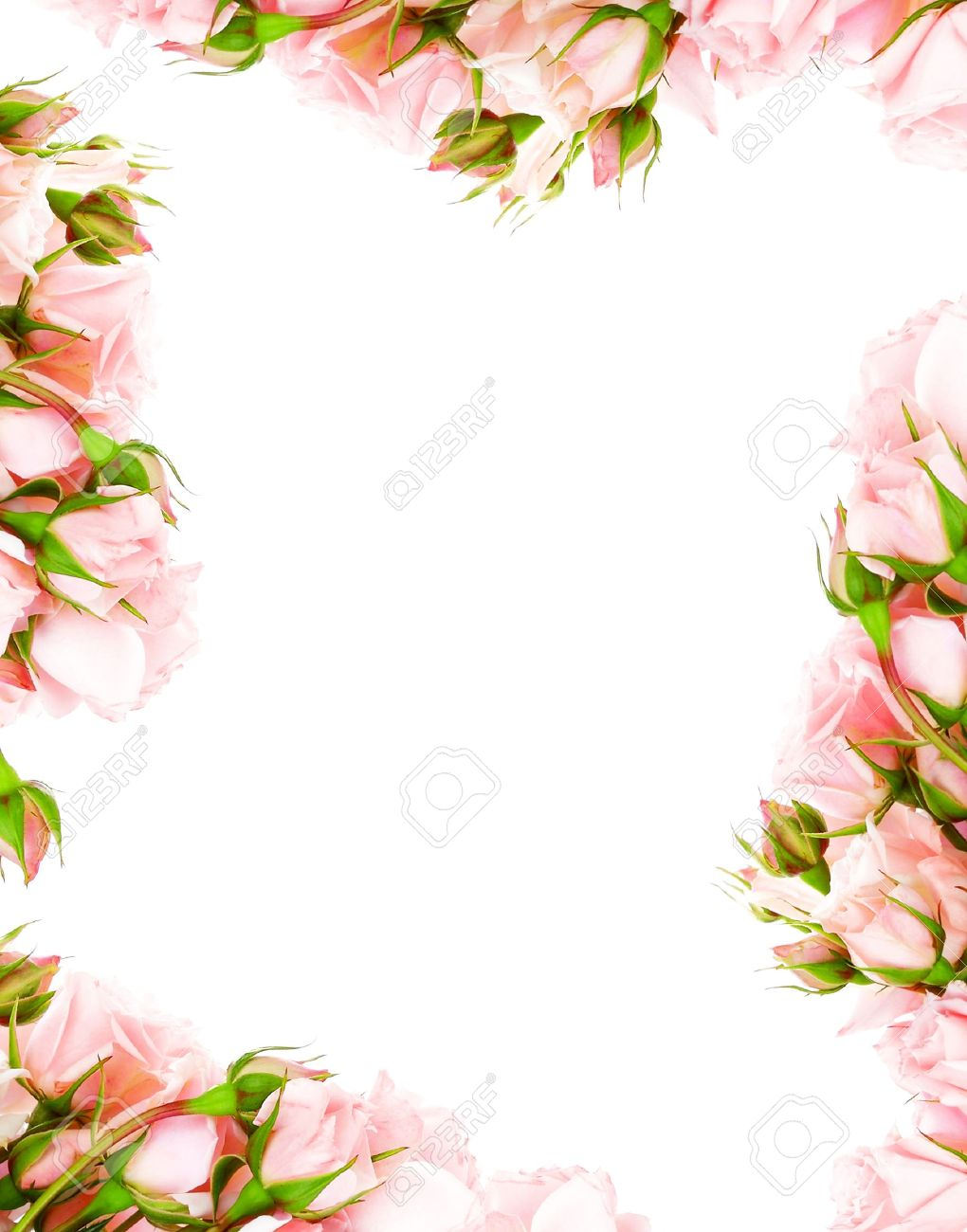 Fresh Pink Roses Frame Border Isolated On White Background Stock ...