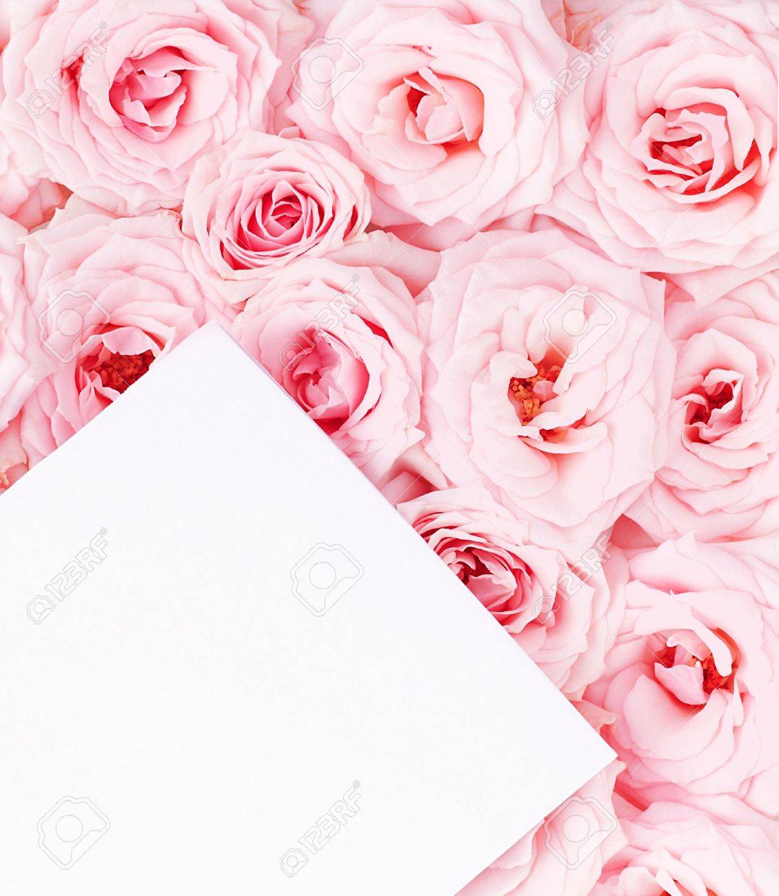 Pink fresh roses background with blank paper greeting card Stock Photo - 9590397