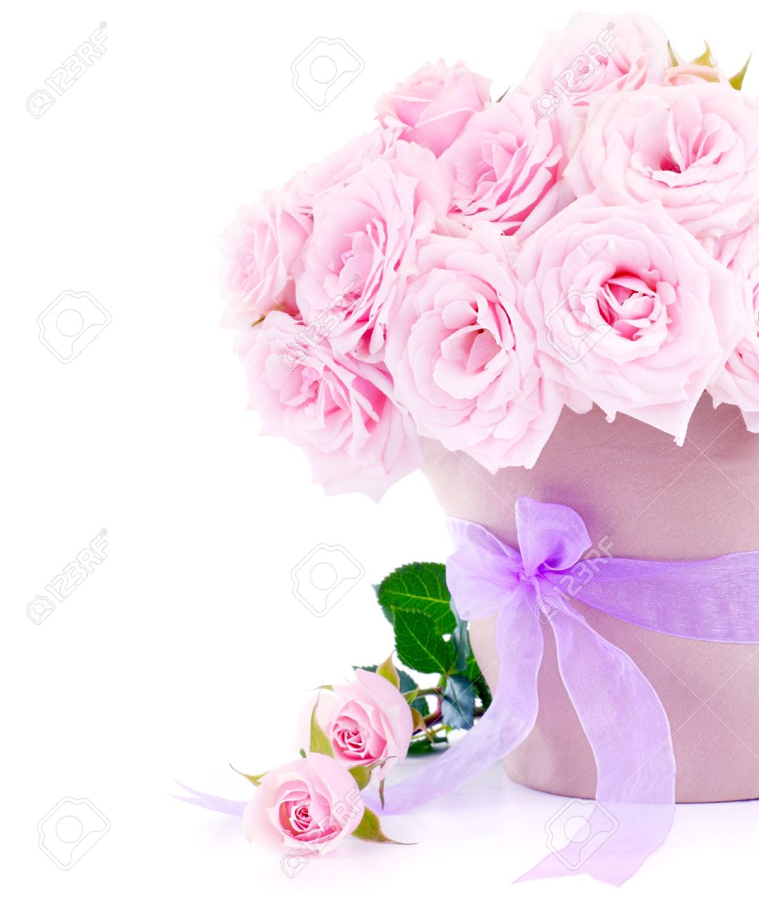 Pot of pink fresh roses, beautiful flowers isolated on white background - 9763263