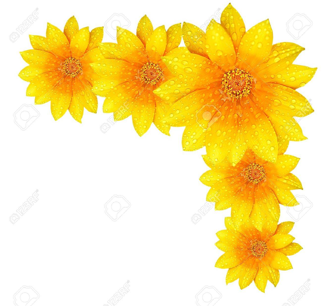 Fresh Yellow Flower Border Isolated Over White Background Stock